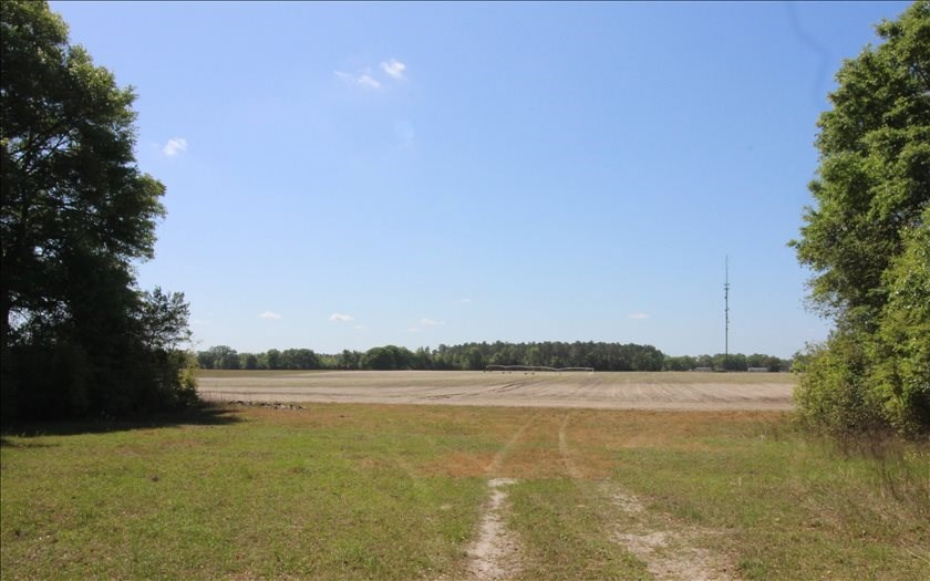 SOLD Farm Land in Mayo, FL Reduced Price!