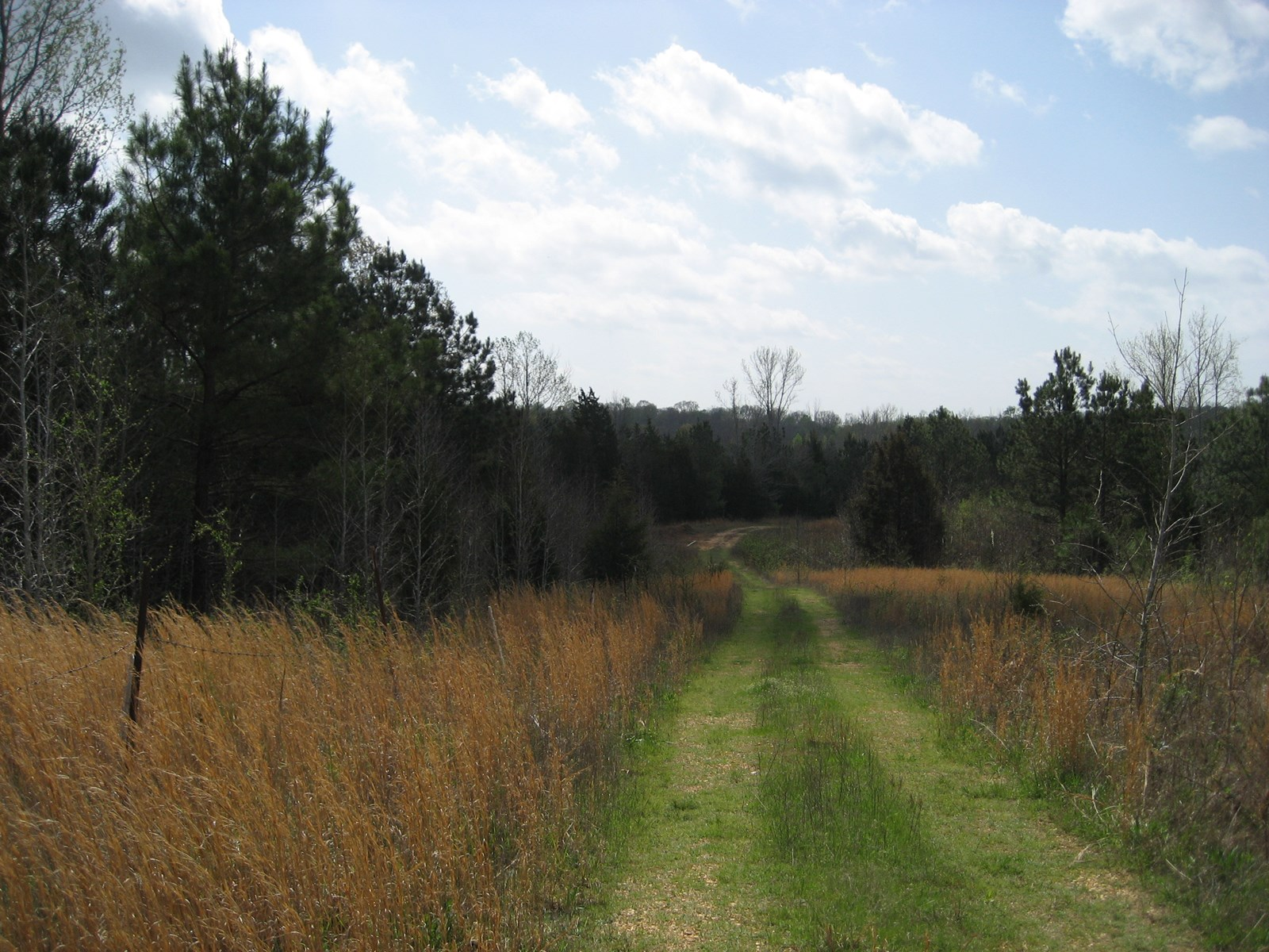 LARGE ACREAGE TN LAND FOR SALE WITH CREEK & TIMBER