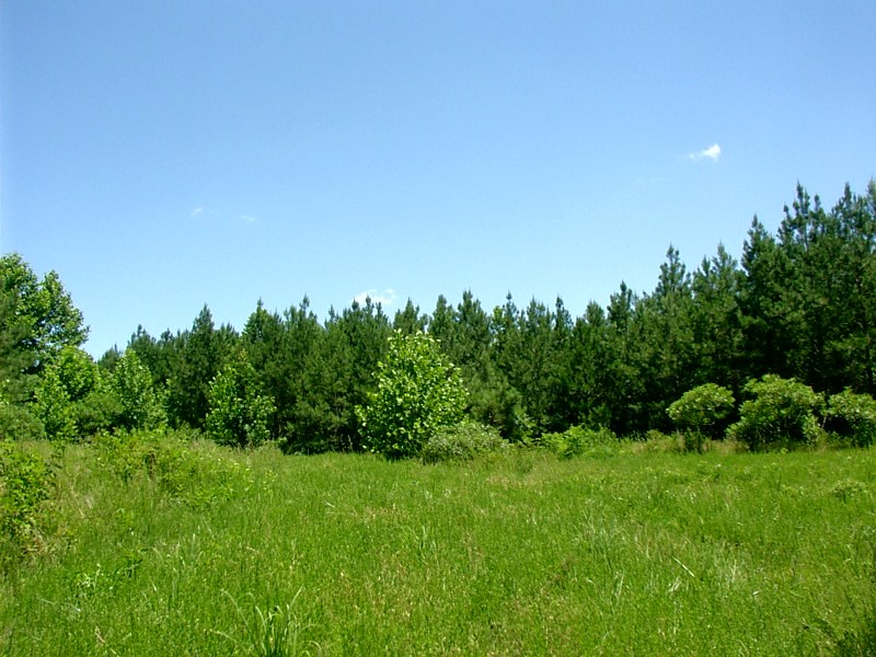Timber and Recreational Tract in Lunenburg County, VA