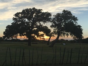 OPERATING VINEYARD AND REMODELED HOME FOR SALE IN TEXAS