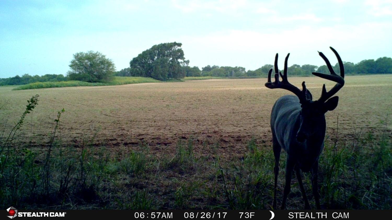 523 Acres Of Hunting, Pasture, Crop & Crp Land In Kansas