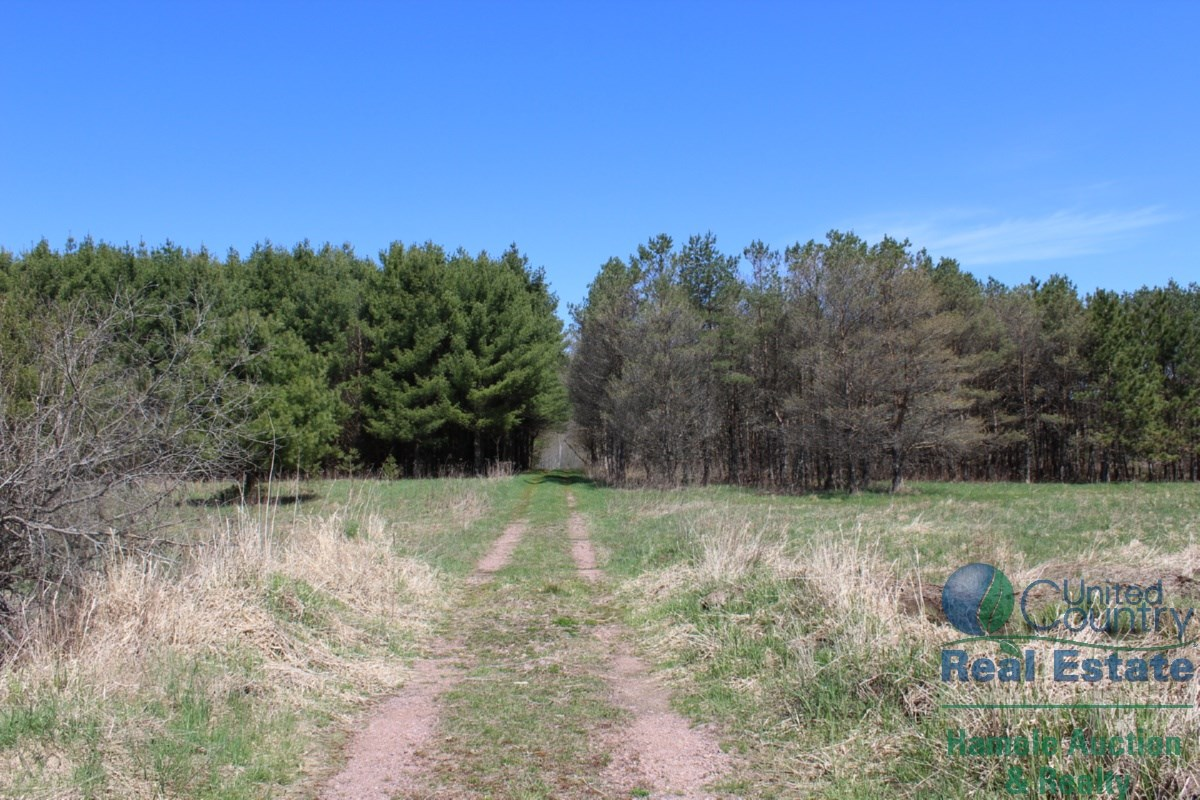 120+/- Acres of Hunting Land with Hunting Cabin Neillsville