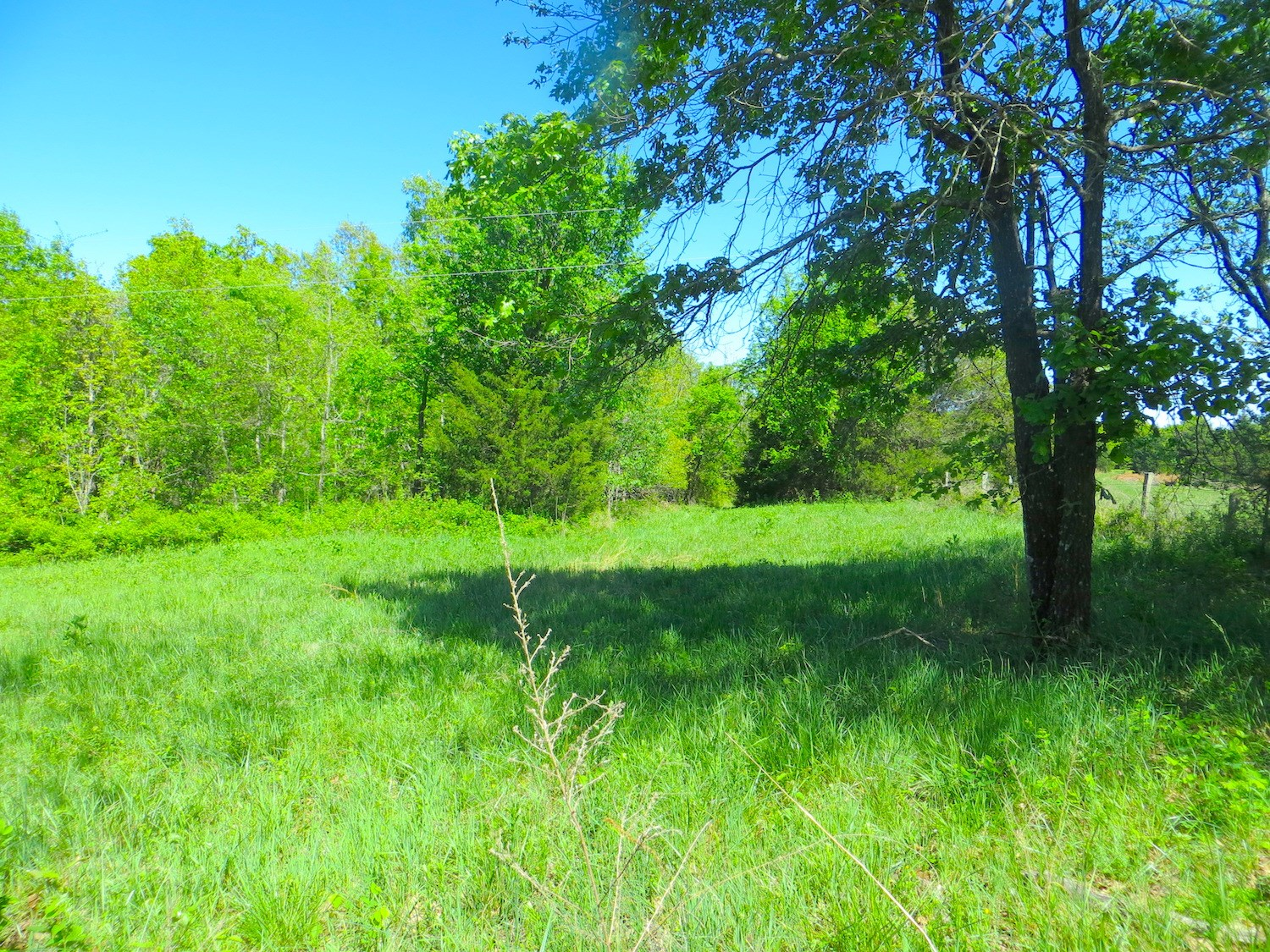Land For Sale in Salem, Arkansas