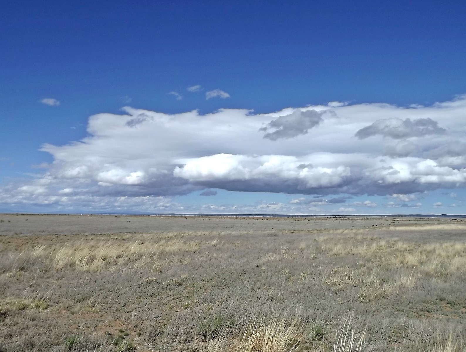 10 Acres of New Mexico Residential Grassland for Sale