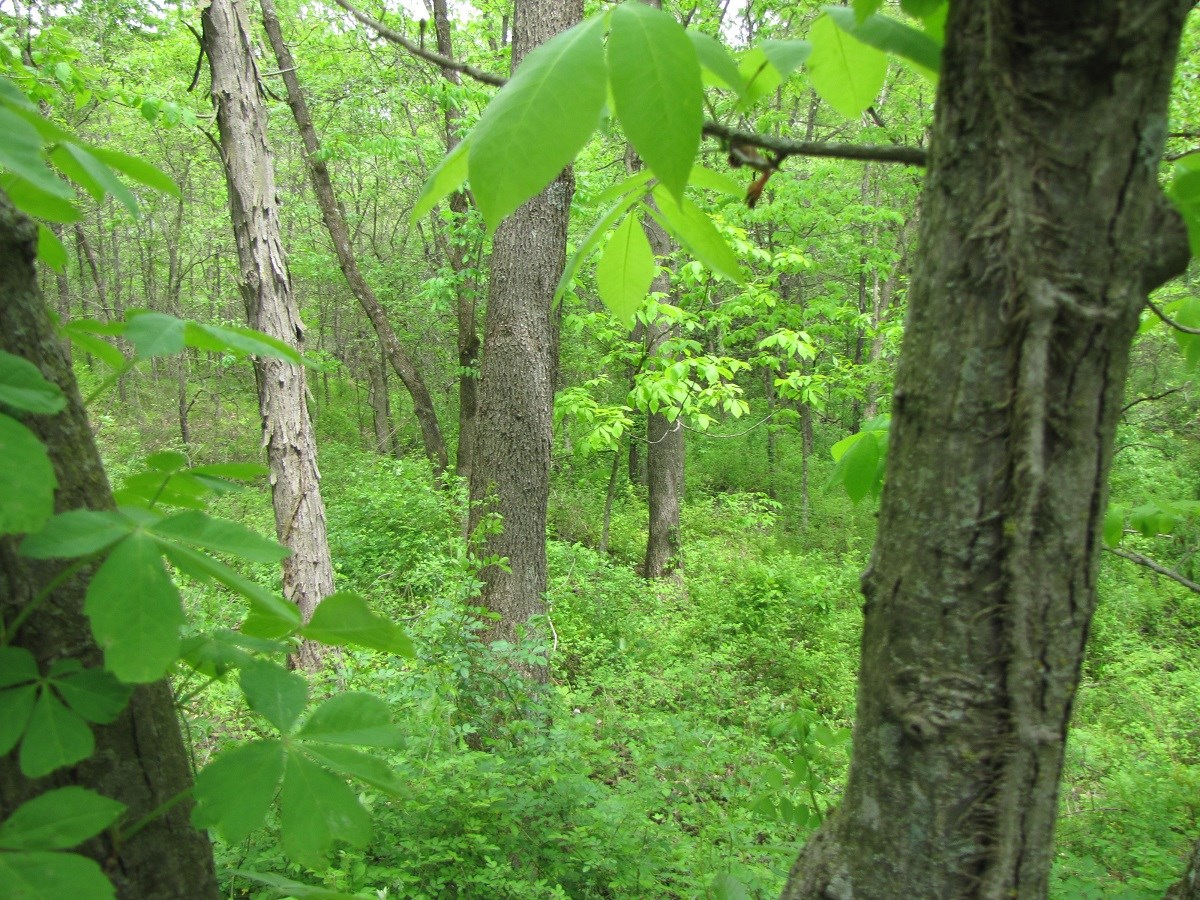 LAND FOR SALE, PASTURE LAND, NORTHWEST MO RECREATIONAL LAND