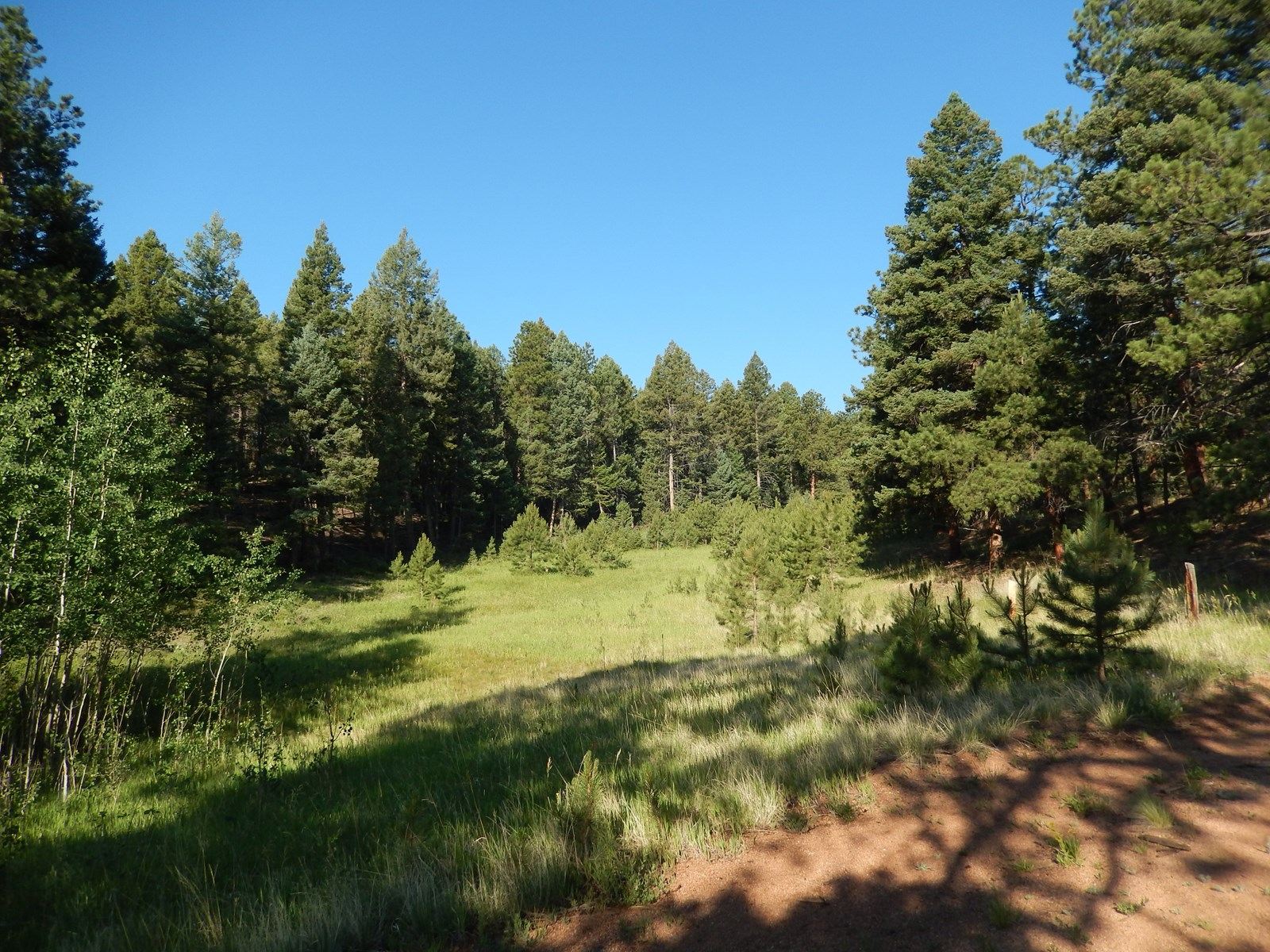 Pike National Forest with 3 Ponds  Woodland Park CO 39 Acres