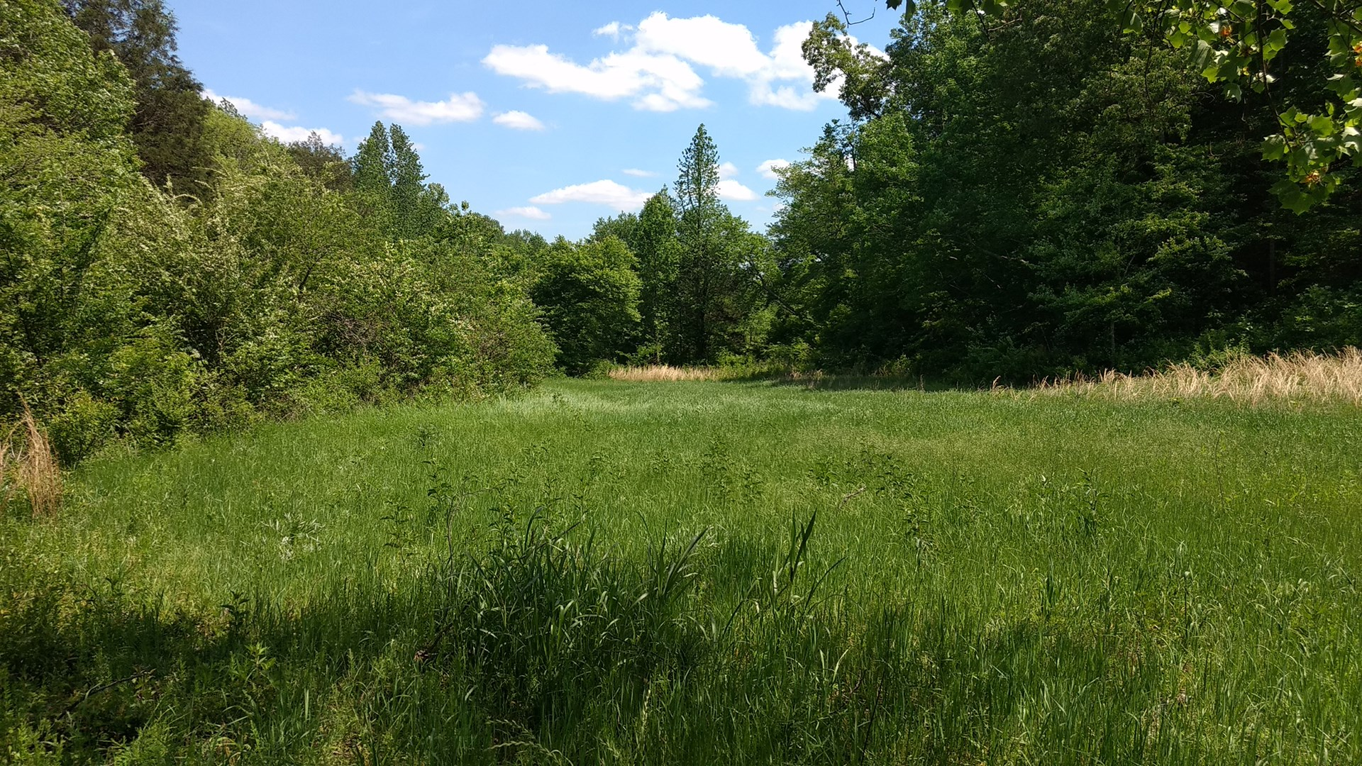 HOHENWALD, TN LEWIS COUNTY LAND ONLY 2 TRACTS FOR SALE