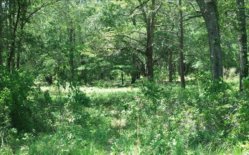 SOLD 10 Acres in North Florida