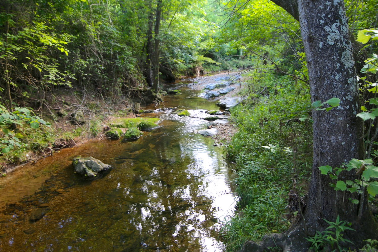 Hunting Property For Sale in the Ozarks