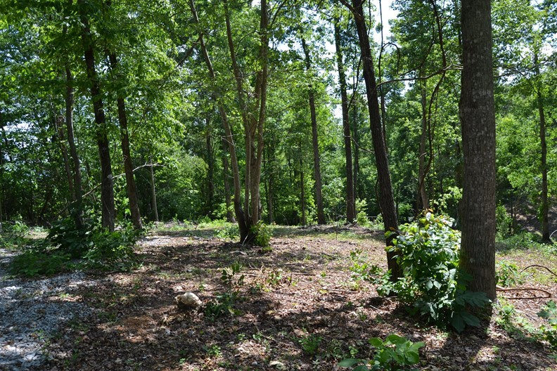 Unrestricted Acreage For Sale Near Cherokee Lake Tennessee