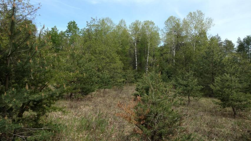Vacant Land - 1.4 Acre for sale in Atlanta Michigan