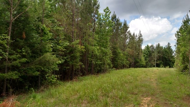 89 Acres: Reed Rd. Mathiston, MS