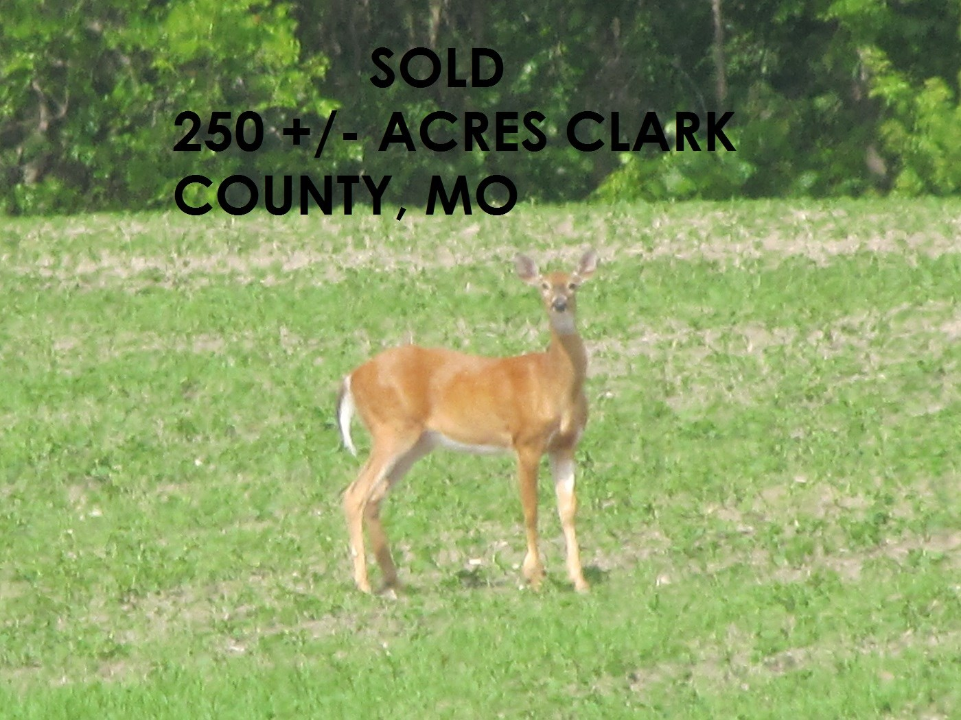 NORTHERN MO TROPHY HUNTING CLARK COUNTY, LAND FOR SALE NEMO