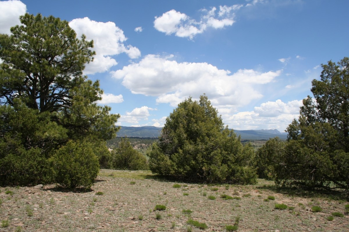 Chama NM Land for sale with Excellent pasture and Hunting