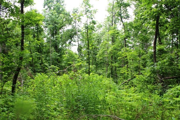 70.68  Acre Hunting Tract For Sale Near Mt. View Arkansas