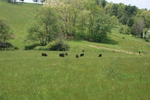 163 ACRES OF LAND LOCATED IN CARROLL COUNTY, VIRGINIA