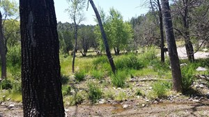 NEW MEXICO HUNTING RANCH NEAR THE GILA WILDERNESS