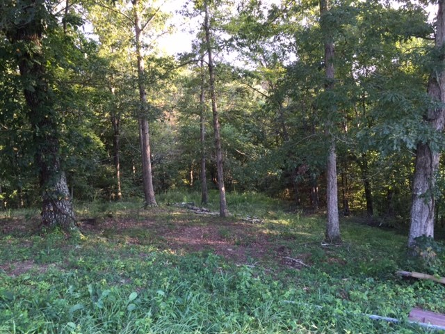 17.5 wooded acres for sale near Summer Shade Ky. vacant land