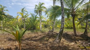VERY AFFORDABLE COASTAL LOT, BOCAS DEL TORO PANAMA