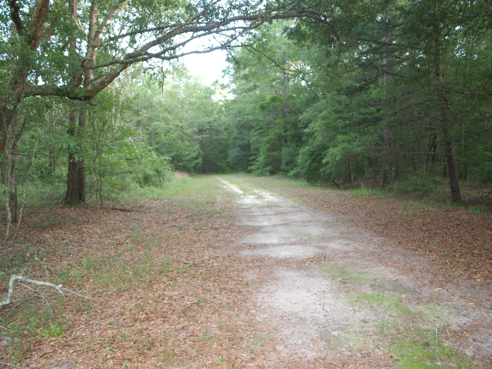 00 DEERWOOD BLVD NORTH FLORIDA HUNTING TRACT + CAMPER HOOKUP