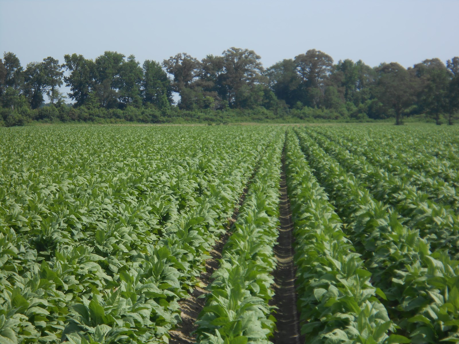 Farmland For Sale in Eastern NC, Martin County