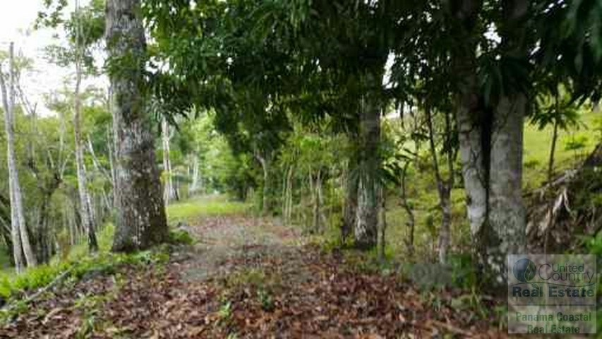 17 Hectares Lot for Sale in Lagarterita Lago Gatun PANAMA