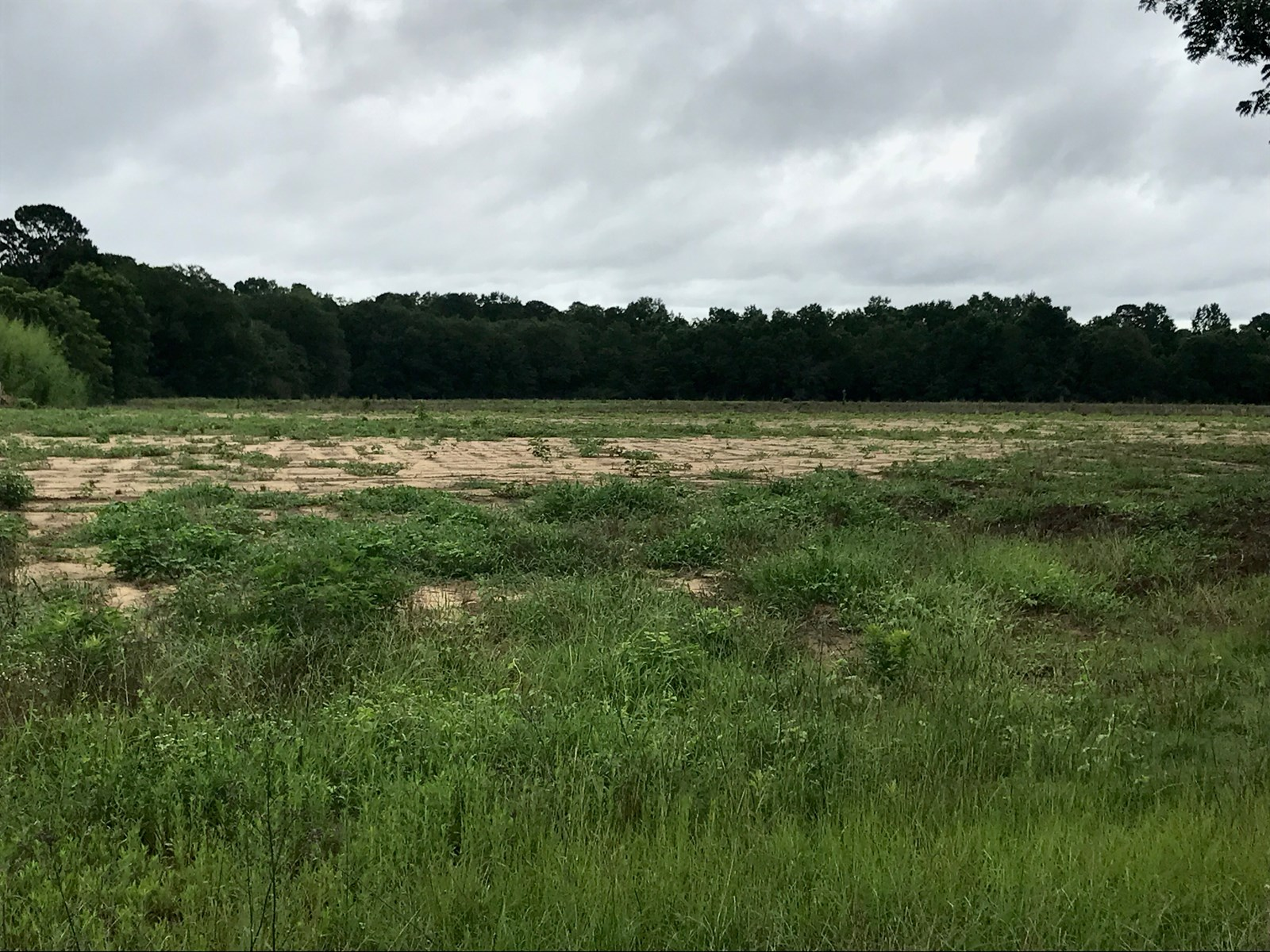 Land for sale in Kinsey, AL