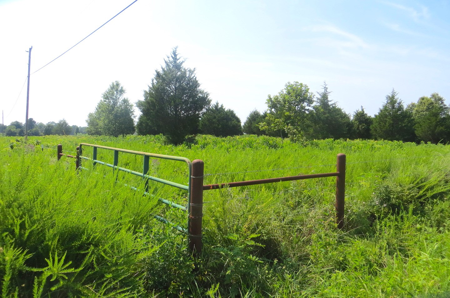 Land For Sale in Thayer