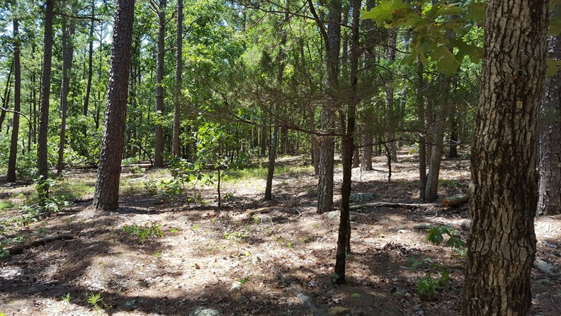 Kiamichi Wilderness Hunting Land