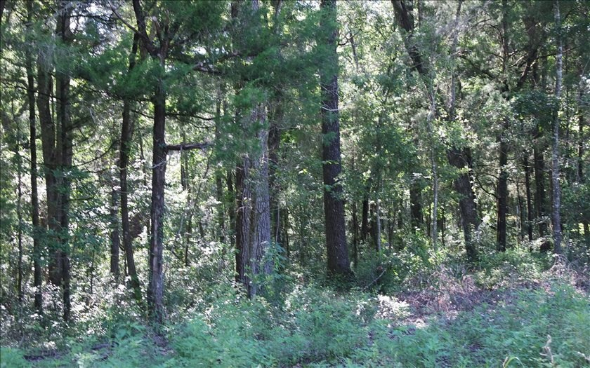 Beautiful Wooded Land in Suwannee County, FL