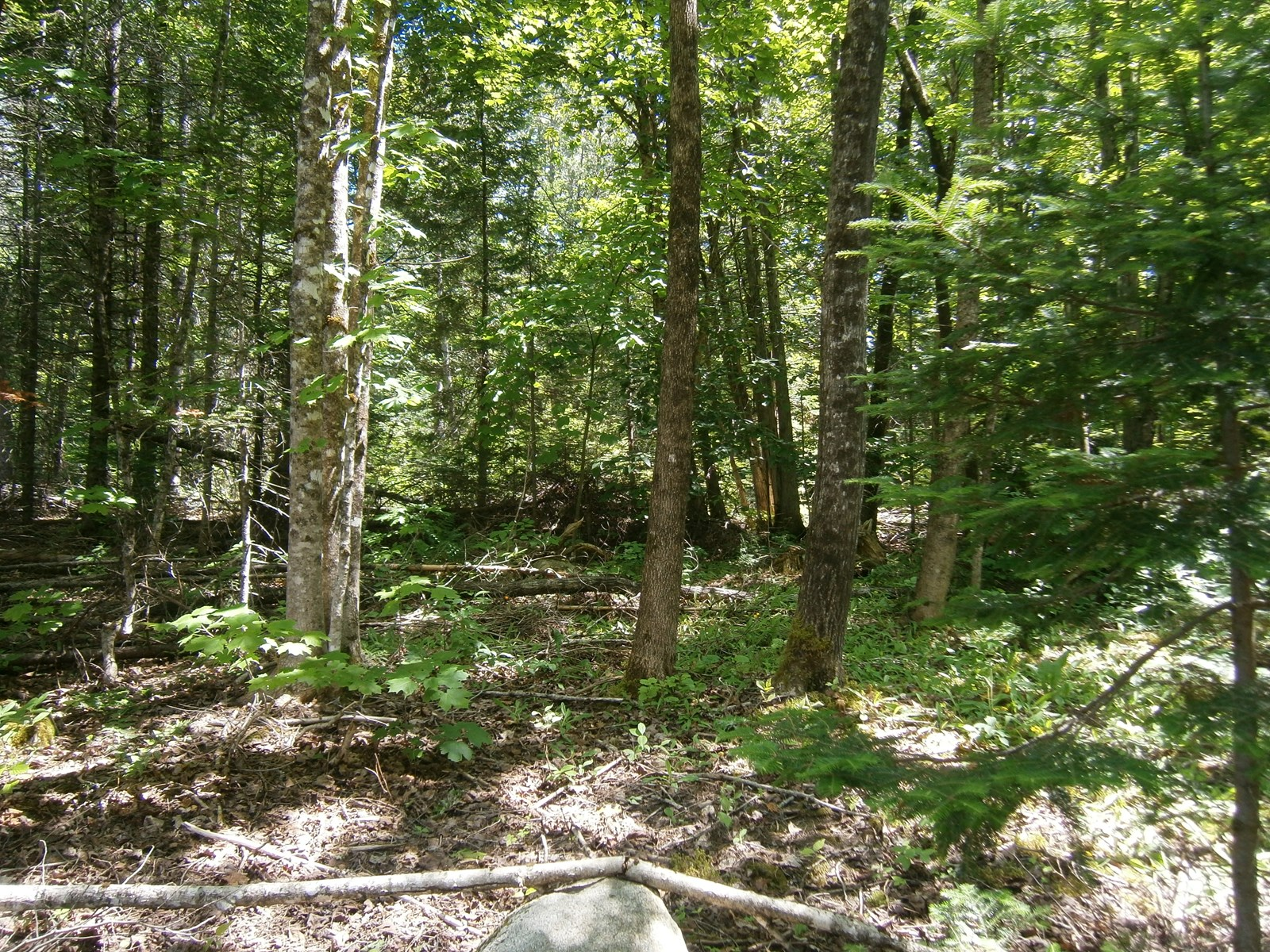 Maine Land for Sale in Springfield