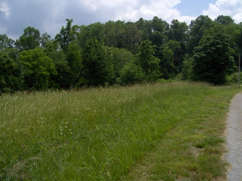 Four Acres for sale, Albany, Kentucky