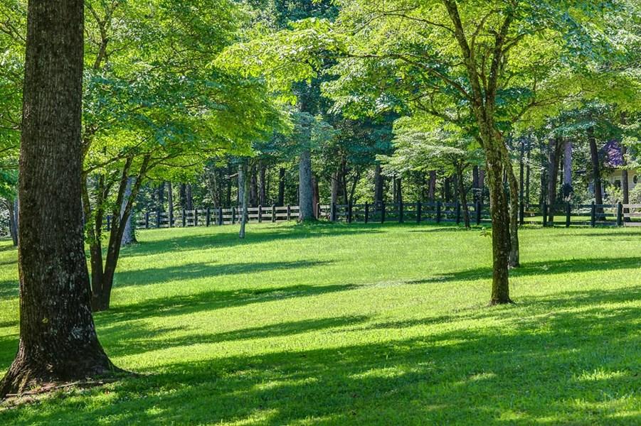 Beautiful yard to play in.