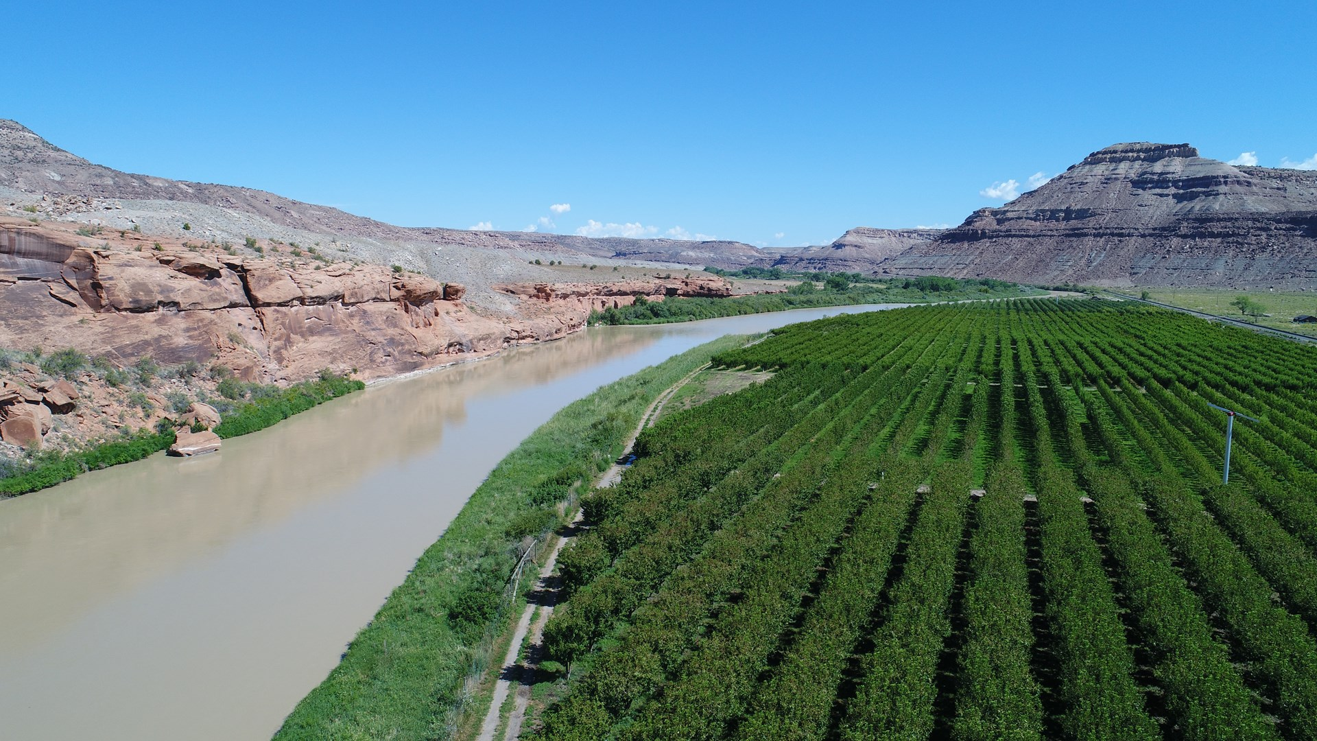 Income Potential Orchard on River for sale in Western CO