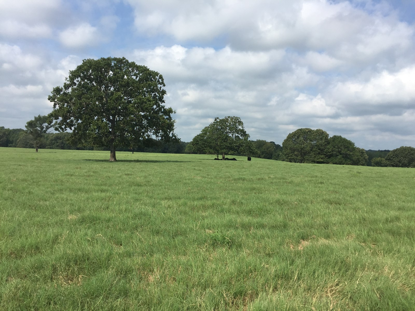 Prime East Texas Pasture Land for Sale