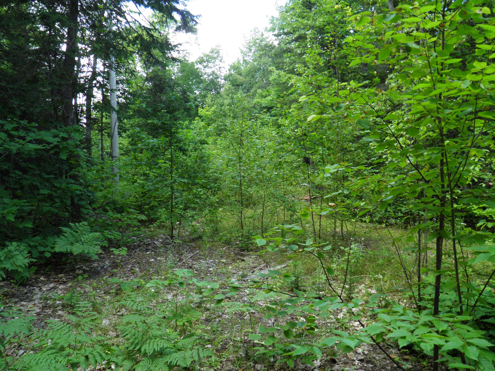 Maine Land for Sale in Patten