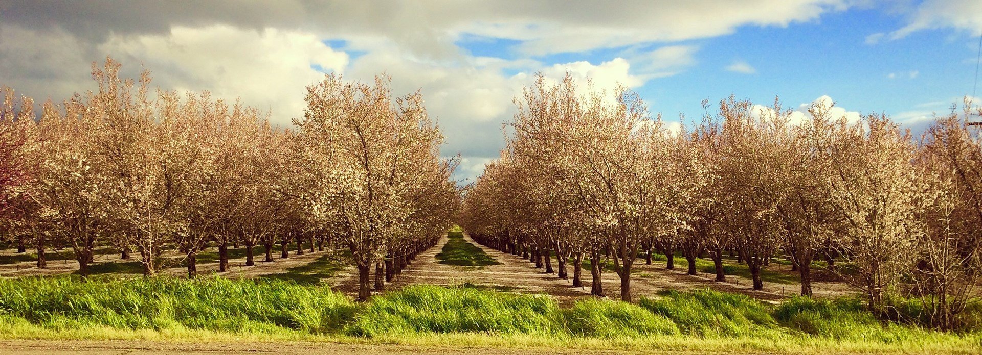 Farms in California, Orchards & CA Agriculture Property