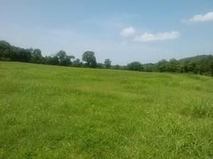 FARMLAND/MARSHALL CO, TN/PASTURE/MINUTES TO NASHVILLE/42 ACR