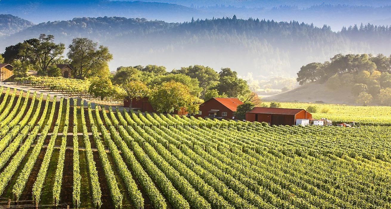 Vineyards For Sale - North California Wineries