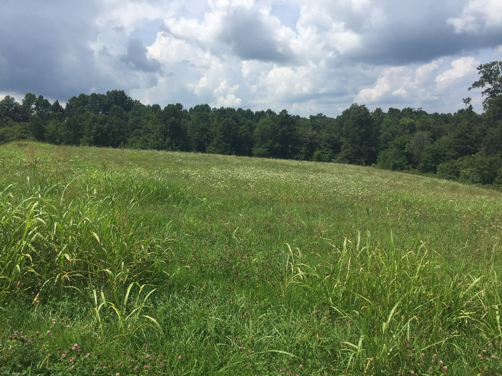 6.51 Acres / Building Site / Private - Liberty, Kentucky