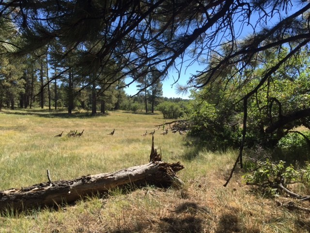 Chama NM Land for Sale Recreational Fishing / Horse Acreage