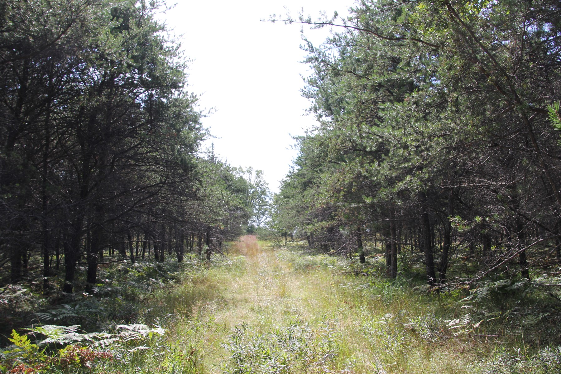 75 Acres of Hunting Property near Curran MI