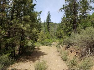 PRIVATE YREKA TIMBERLAND FOR SALE