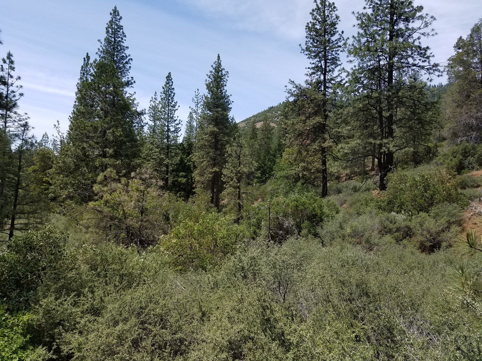 Private Timber Land Yreka California
