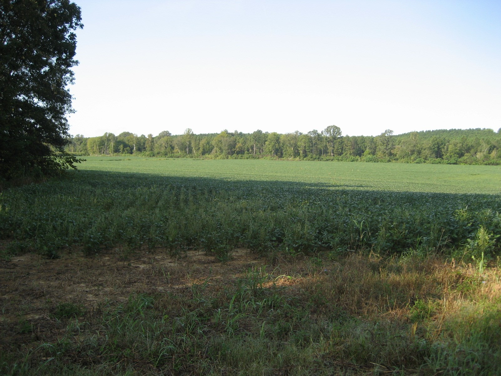 ROW CROP LAND FOR SALE IN TN - HUNTING LAND