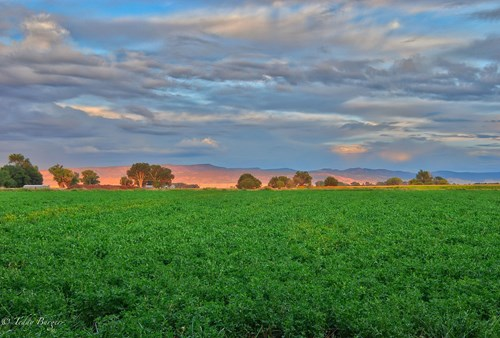 Agricultural,Irrigated,Equine Farm For Sale Western Colorado