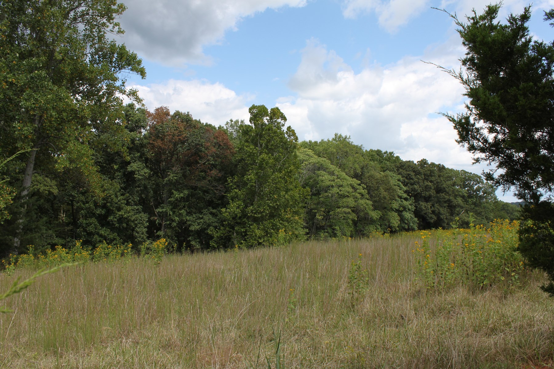 5 Acres UNRESTRICTED LAND IN VIRGINIA