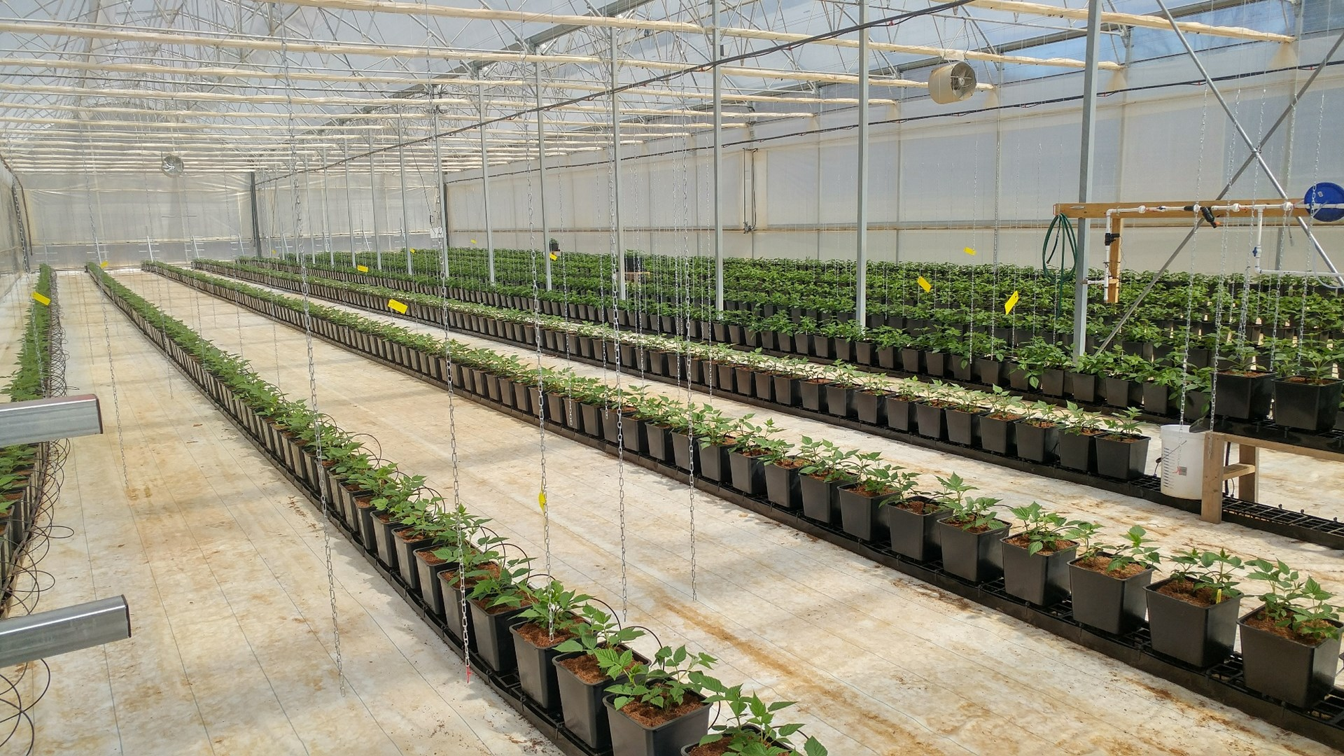 Greene County Greenhouse And Equipment For Sale East Tenn