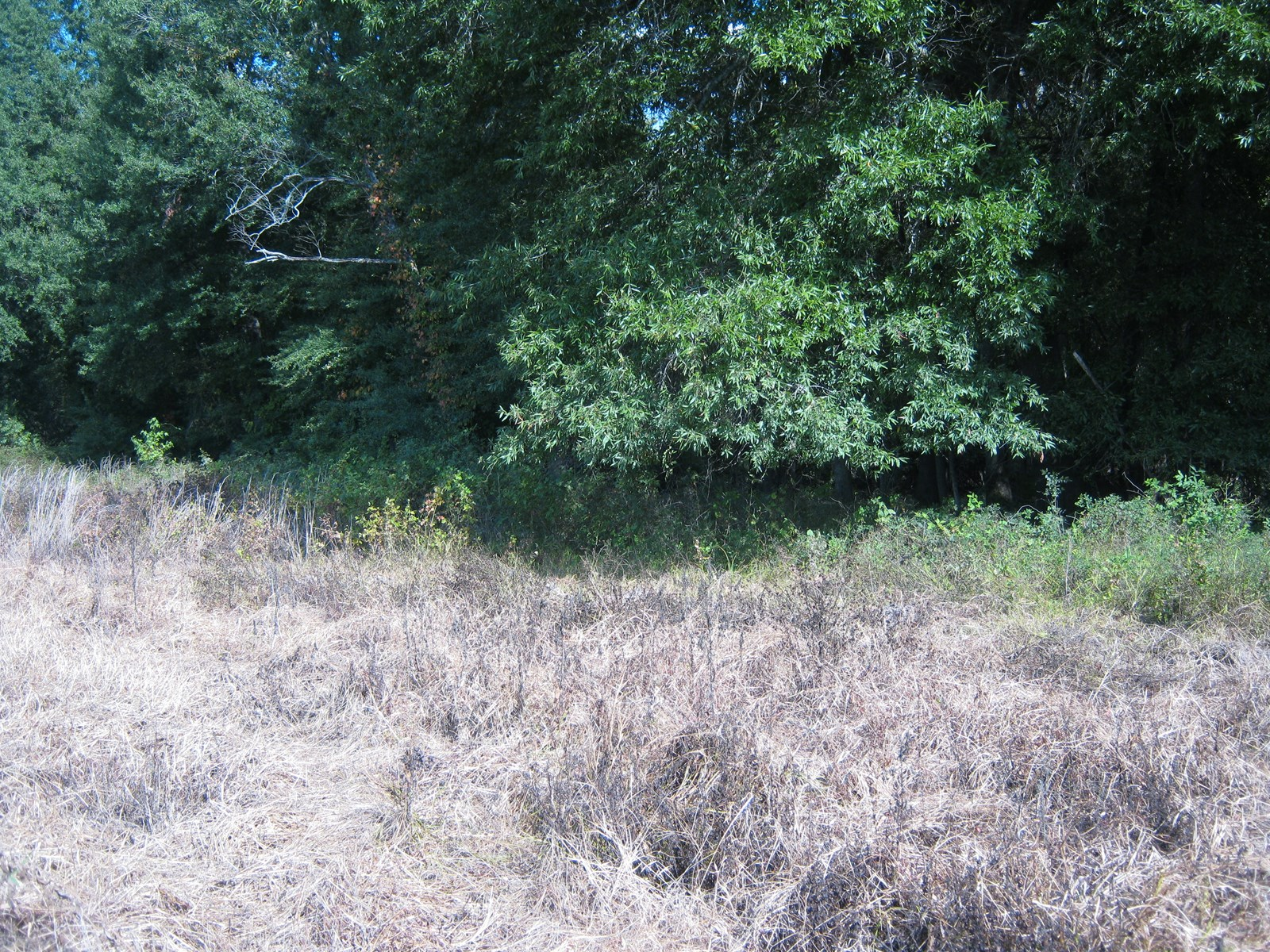 River Lot on Black River For Sale in Randolph County, Ark.