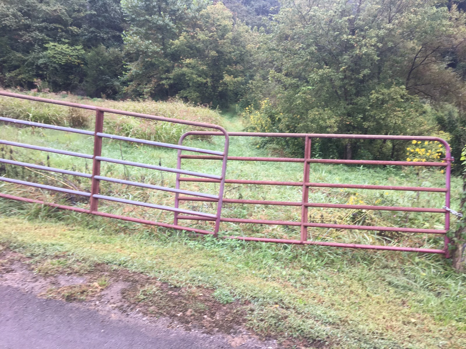 56 Acres For Sale in Tazewell, TN